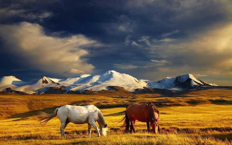 Экспедиция по Алтаю на лошадях, велосипедах и рафте