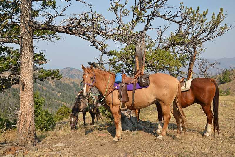 На лошадях по Сумультинскому заказнику