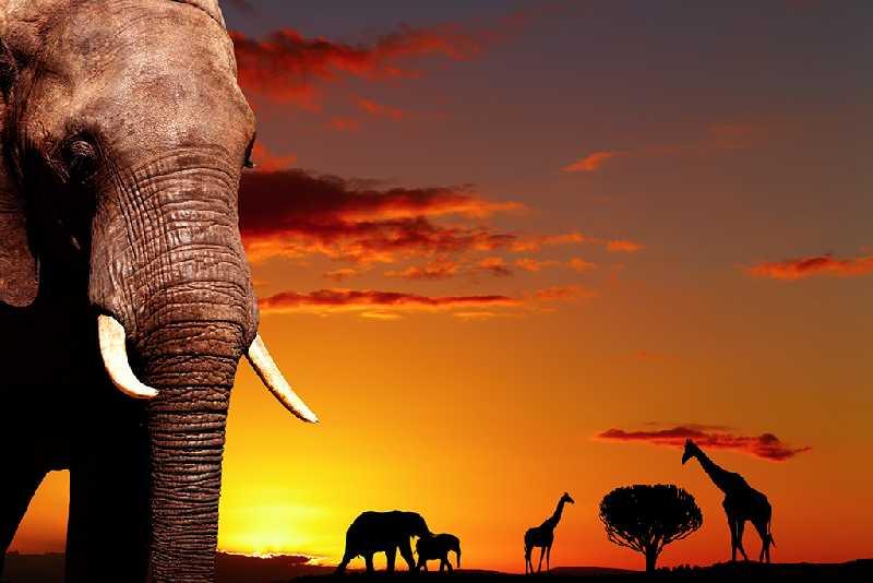 Новый Год на Занзибаре!!!