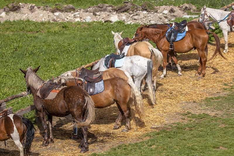 Конный поход по предгорью Южного Урала