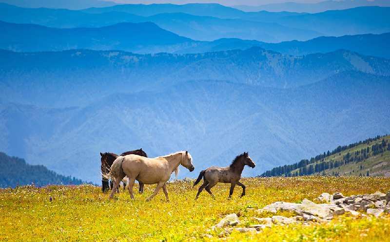 Осенняя конная экспедиция по алтайской тайге