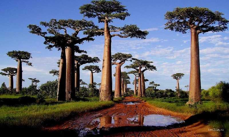 Мадагаскар запад и юг на автомобиеле с водителем 12 дней