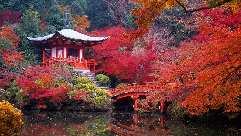 Экспедиция в Японию в сезон красных кленов