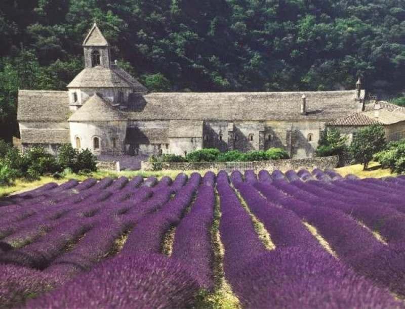 Я организовываю тур по Франции. Париж,Прованс,лавандовые поля,побережье! Идея тура: обучение...