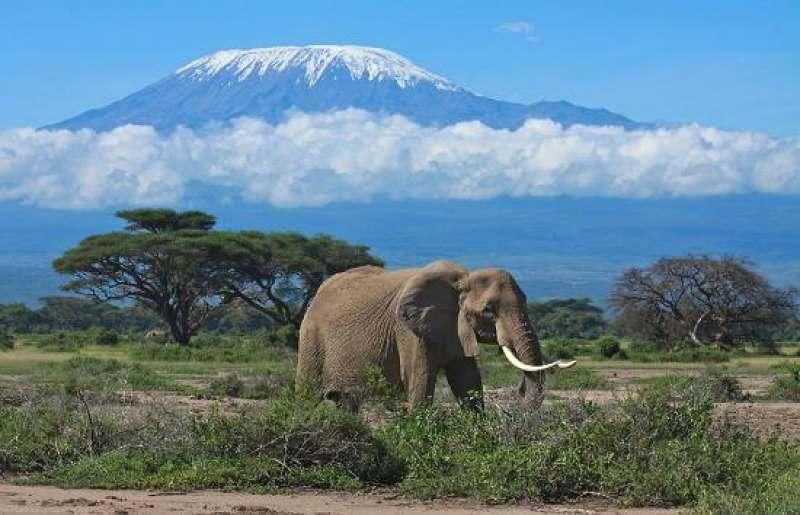 Сафари трип по Кении