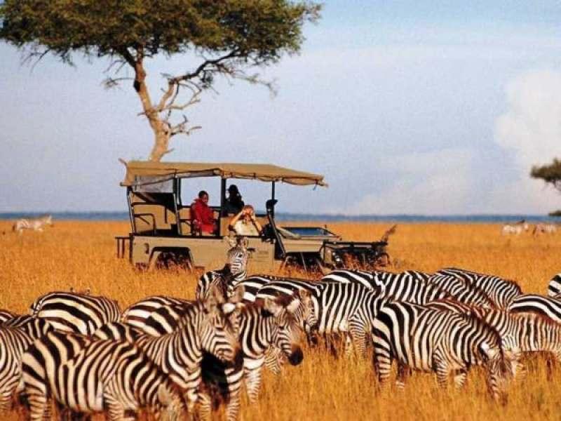 Крутое сафари в Танзании и роскошный пляжный отдых