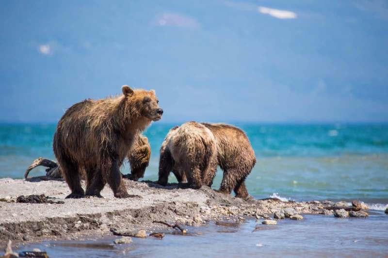 Логово бурого медведя - Курильское озеро