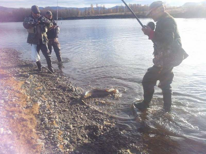 Июнь. озеро Хубсугул. Реки прихубсугулья. Один-два нахлыстовика желают присоединится к рыболовной...