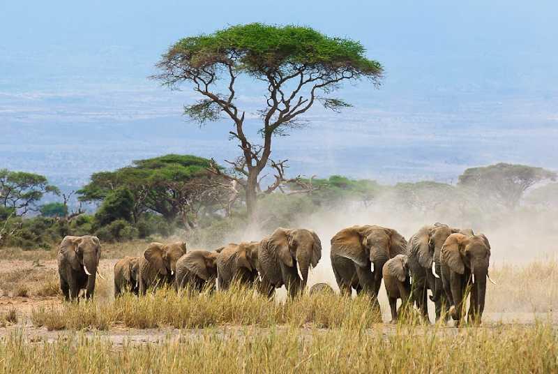 Путешествие по Кении