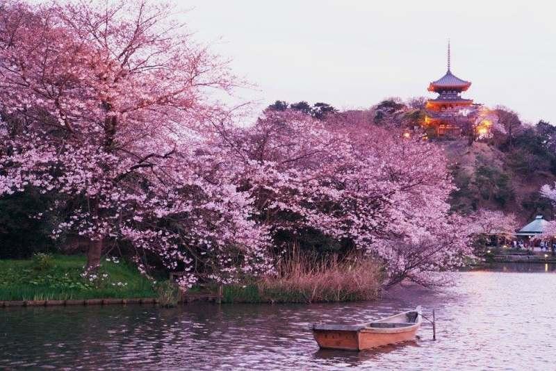Собираю компанию для путешествия в Японию. Маршрут поездки: Токио- Йокогама- Камакура- Мацумото-...